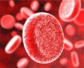 Иммуногематология Группа крови